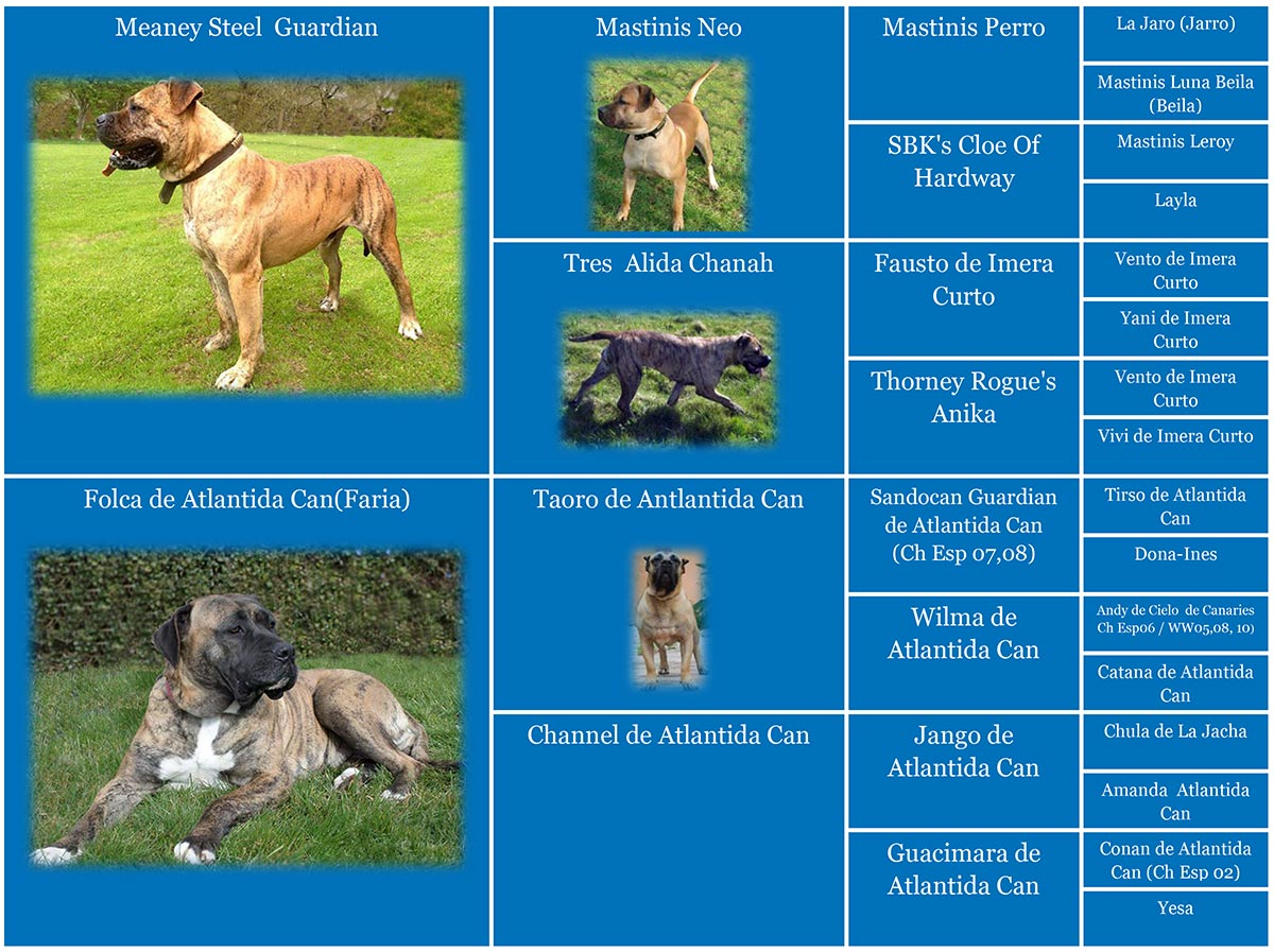 Pedigree of Bane de Guardian Presa canario